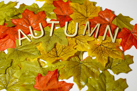 The concept of Autumn with coloured leaves and the letters spelling autumn