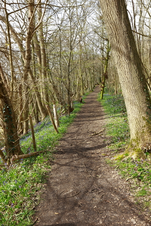 A footpath through the woodland Stock Photo