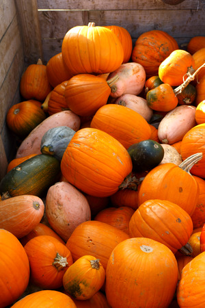 the concept of Halloween with a large crate of mixed pumpkins
