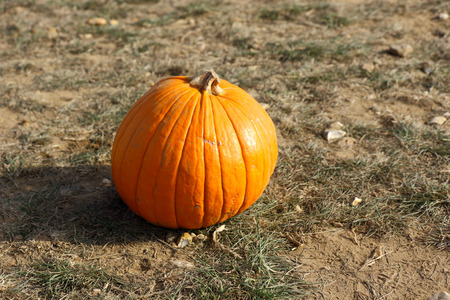 The concept of Halloween with a Pumpkin in the field Stock Photo