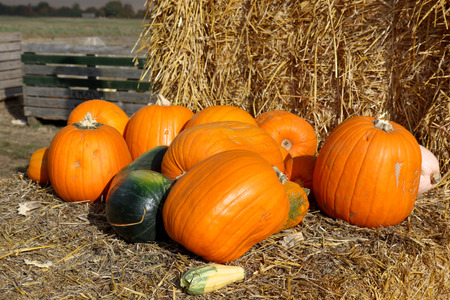 The concept of Halloween with various pumpkins on bales of hay Stock Photo