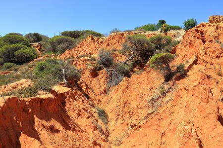 green trees growing from the red cliffs of the Caminho Do Baleeira nature reserve near Albufeira Stock Photo