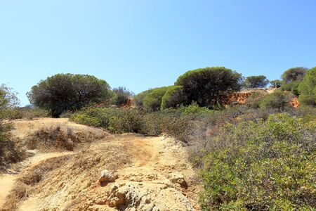 The green trees and foliage of the Caminho Do Baleeira nature reserve near Albufeira