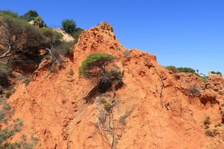A pine tree growing halfway up the red cliffs near the Caminho Dal Baleeira Nature Reserve Stock Photo