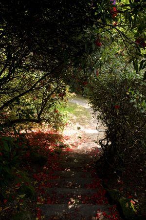 a garden path photo