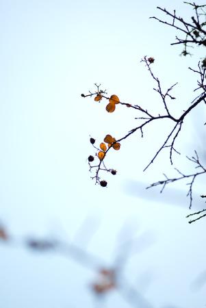 poignant: Leaves, autumn, macro, fuzzy feeling, quiet, beautiful, sad, sad, poignant
