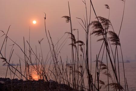 magnificent mile: River sunset