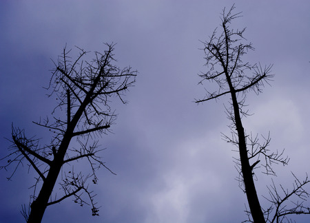 Trees under the dark sky