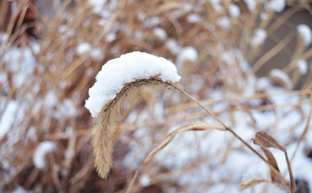 connotation: Snow and grass