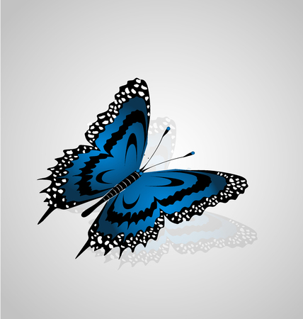 Beautiful blue butterfly icon vector
