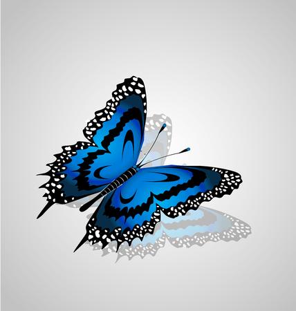Beautiful blue butterfly icon vector illustration. Illustration