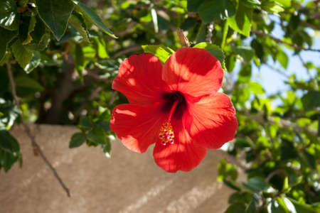 Red flower in the Nature