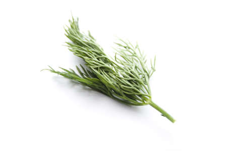 Fresh Green Dill  on white background Stock Photo