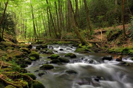 Stream in den Wald gehen und über Felsen Standard-Bild