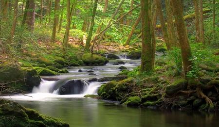 Corriente que fluye en el bosque sobre rocas cubiertas de musgo Foto de archivo