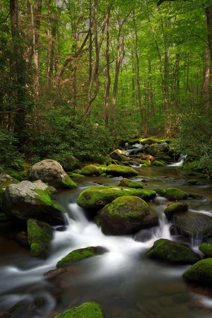 Forest stream with fast moving water over mossy rocks. photo