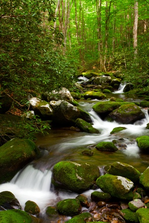 Stream moving in the forest over mossy rocks. photo
