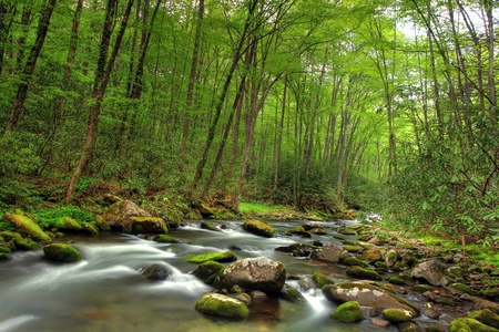 Beautiful stream in the forest photo