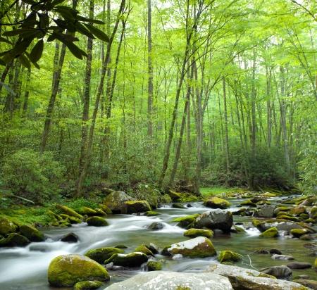 strumień: Stream będzie przez dżunglę