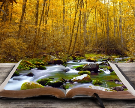 Open book with autumn stream and rocks  Stock fotó