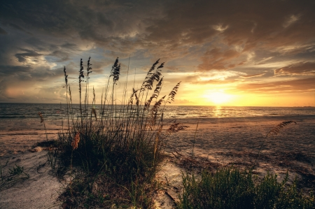 Tall grass on beach at sunset photo