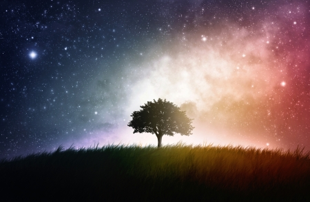 stars: A single tree in a field with beautiful space background