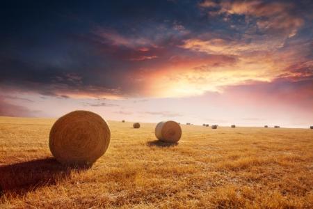 hayroll: Hay field during beautiful sunset Stock Photo