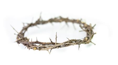 crown of thorns: Corona de espinas en el fondo blanco