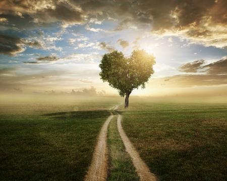 Een boom in de vorm van een hart bij zonsondergang