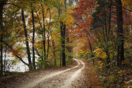 autumn path: Beautiful pathway through the forest during autumn.