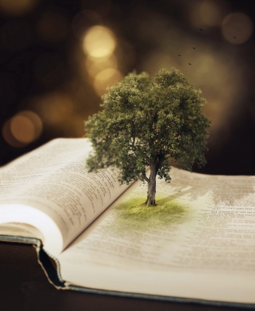 small tree: Surreal image of a tree growing out of the pages of a book. Stock Photo