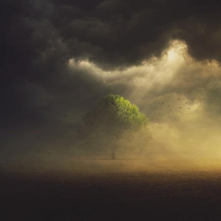 태양은 필드에 하나의 나무에 구름을 통해 빛나고있다.