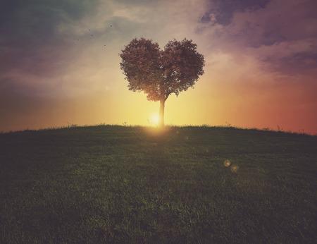 일몰 잔디 언덕에 아름 다운 심장 모양의 나무