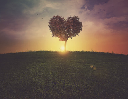 A beautiful heart shaped tree on a grassy hill at sunset