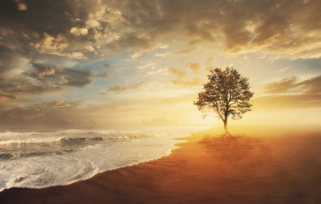 海の波の前に砂にツリーと美しい夕日。