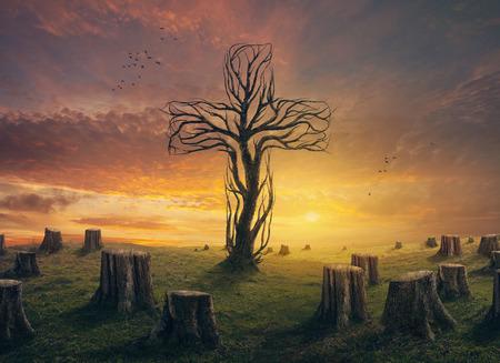 나무 그루터기의 분야에서 십자가 모양의 나무. 스톡 콘텐츠