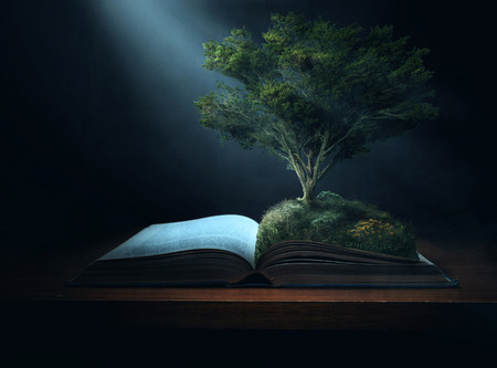 bible light: A large tree grows out of the pages of a Bible. Stock Photo