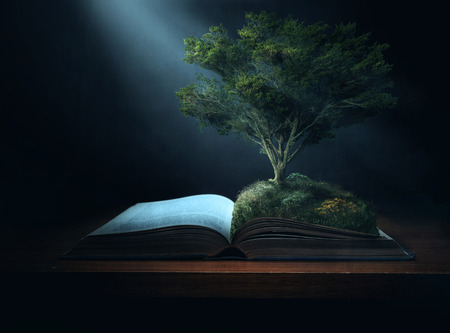 light to dark: A large tree grows out of the pages of a Bible. Stock Photo