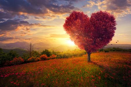 Czerwone serce w kształcie drzewa o zachodzie słońca.