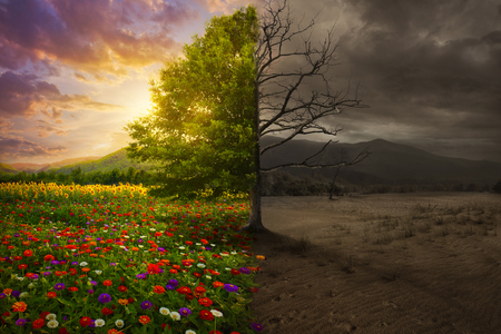Beautiful colorful landscape transforms to desert with no color.