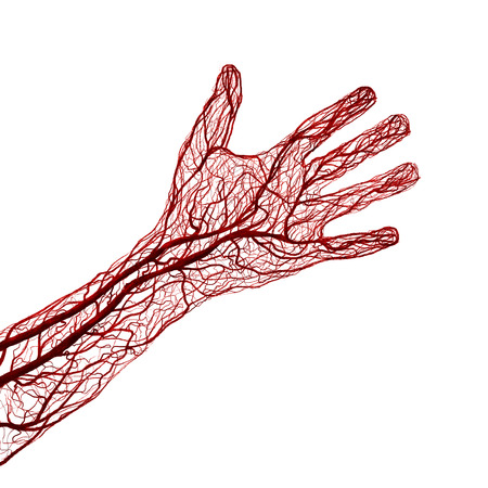 An arm and hand showing only blood veins. Banco de Imagens