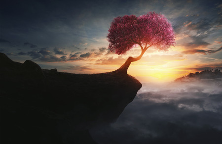 A single cherry tree on top of the rocky mountain