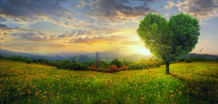 Een hartvormige boom op een panoramisch landschap.