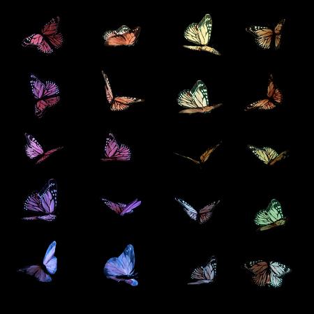 검은 색 바탕에 비행 중에 여러 화려한 나비.