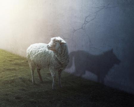 Een schaap met de schaduw van een wolf