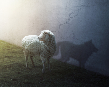 Ein Schaf mit dem Schatten eines Wolfes