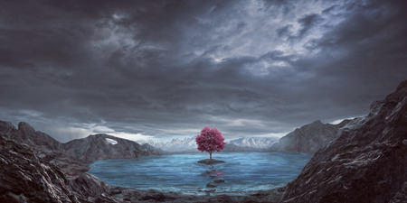 A single pink tree in the middle of a lake 写真素材