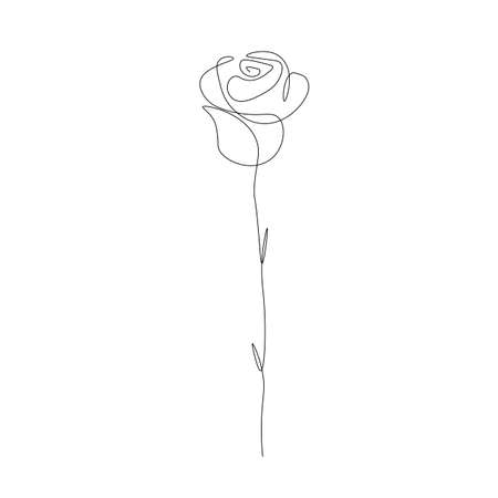 Rose flower on white. Vector illustration Illustration