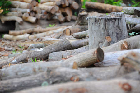 Stacked logs, cut timber and stump photo
