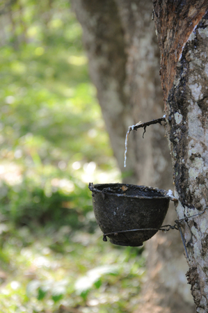 tapper: Bowl for rubber tapping